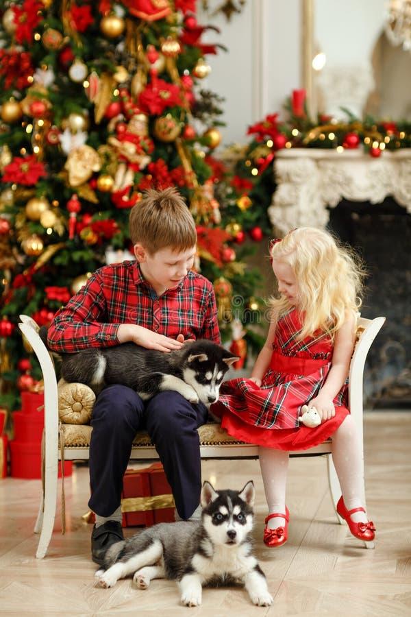 Fratello e sorella che giocano con i cuccioli del husky per il Natale fotografia stock libera da diritti