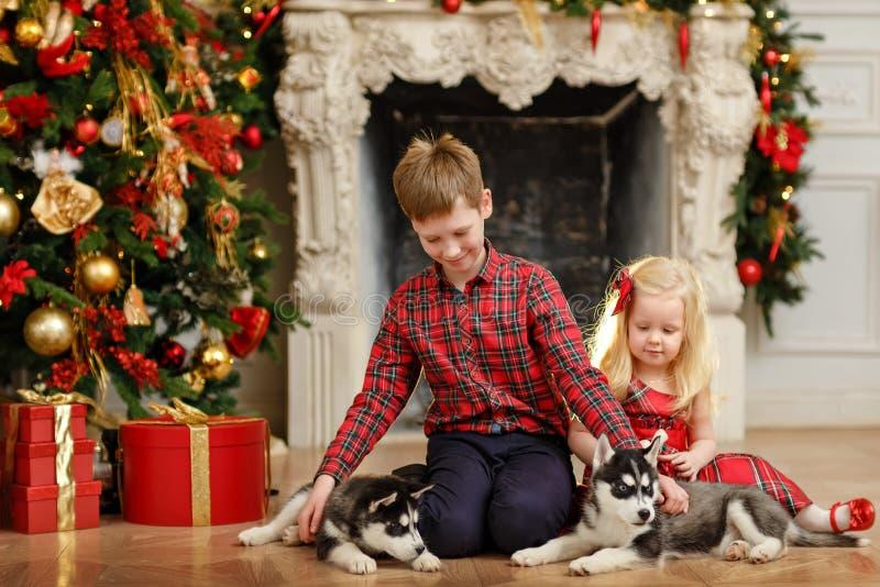 Fratello e sorella che giocano con i cuccioli del husky per il Natale immagine stock libera da diritti