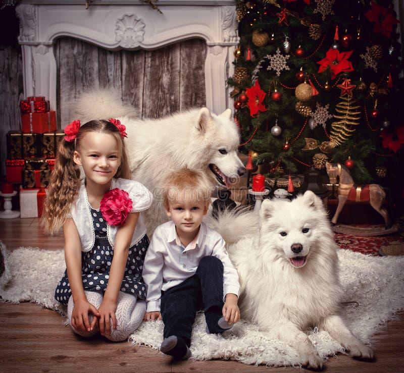 Fratello e sorella con un cane sui precedenti di un albero di Natale immagine stock libera da diritti