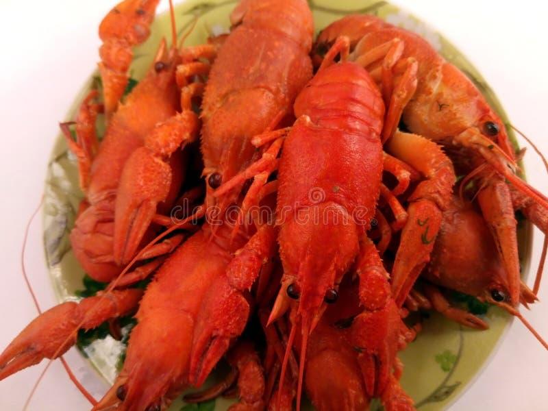 Fraternidad de los cangrejos rojos, cangrejos hervidos con eneldo, cánceres a la cerveza, bocados de la cerveza fotografía de archivo libre de regalías