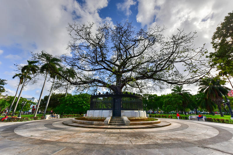 Fraternity Park - Havana, Cuba. Havana, Cuba - January 8, 2017: Ceiba Tree in the center of American Fraternity Park in Havana, Cuba royalty free stock photos
