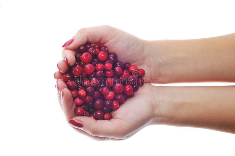 Frau übergibt Holding cranberrys lizenzfreie stockbilder