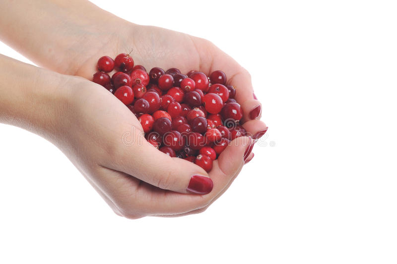 Frau übergibt Holding cranberrys stockfotografie