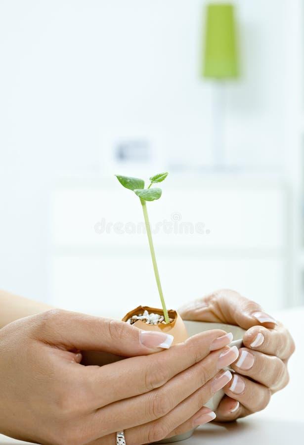 Frau übergibt Holding Grünpflanze lizenzfreie stockfotografie