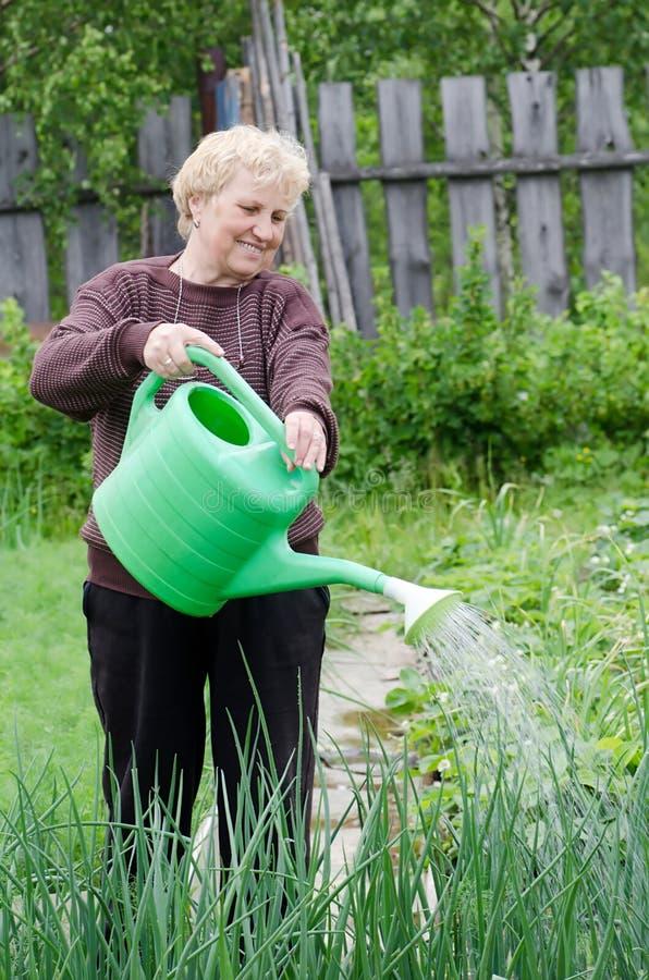 Frau arbeitet an einem Gemüsegarten lizenzfreies stockfoto