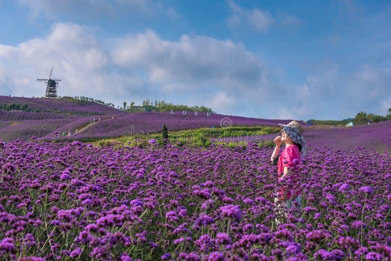 Frau auf dem Lavendelgebiet stockfotos