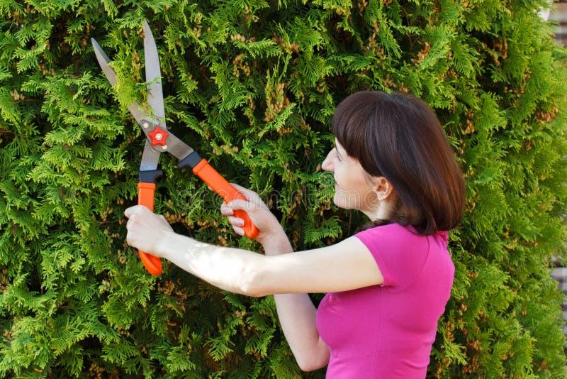 Frau benutzt Gartenarbeitwerkzeug, um Büsche, getrimmte Saisonbüsche zu trimmen lizenzfreies stockfoto