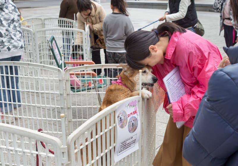 Frau bietet einen Hund für Annahme an lizenzfreies stockbild