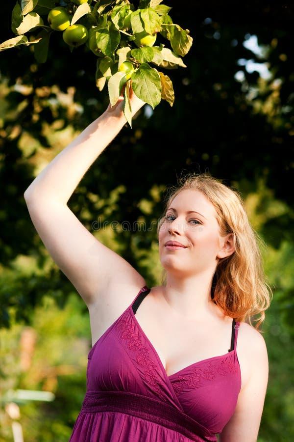 Frau, die Äpfel im Garten erntet stockfoto