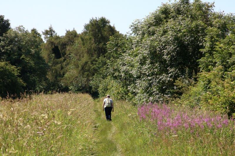 Frau, die auf Kanalleinpfad Cumbria-Landschaft geht stockbilder