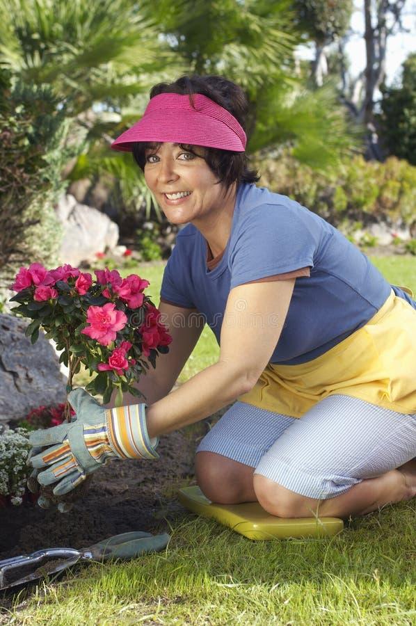 Frau, die Blumen-Anlage pflanzt stockfotos