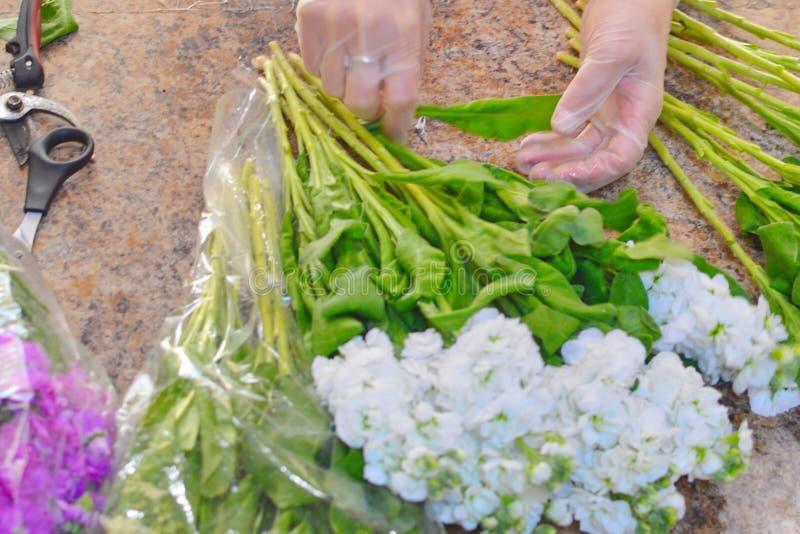 Frau, die Blumenstrauß von Frühling mattiola Blumen macht lizenzfreie stockfotografie
