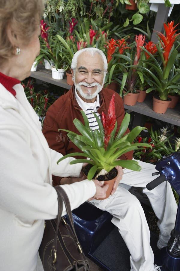 Frau, die dem älteren Mann eingemachte Blume im botanischen Garten zeigt stockfoto