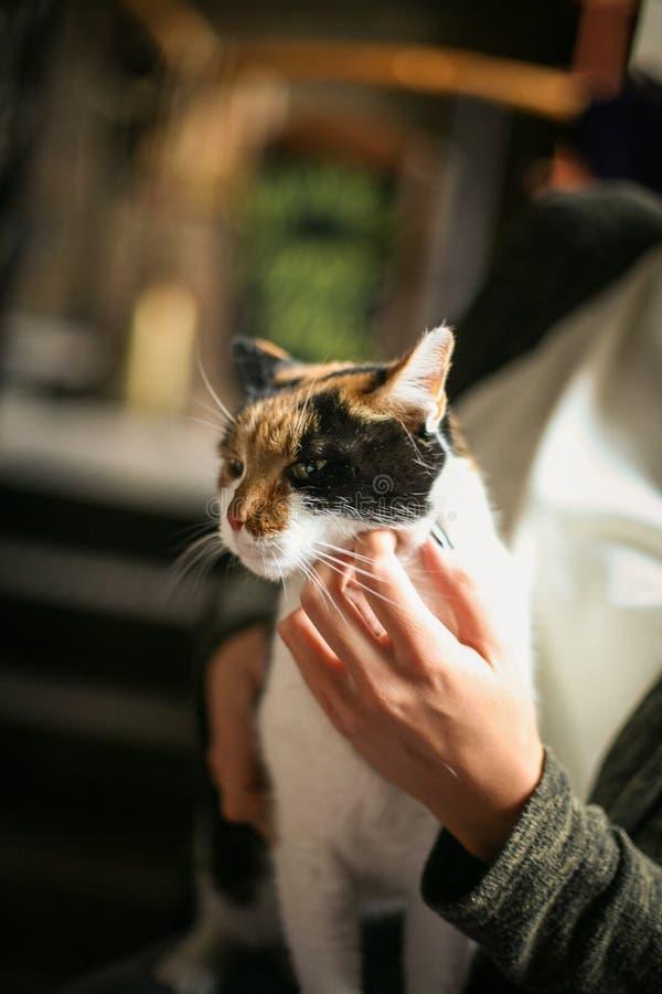 Frau, die in der Hand ihr Katzenhaustier hält Abschluss oben lizenzfreie stockfotografie