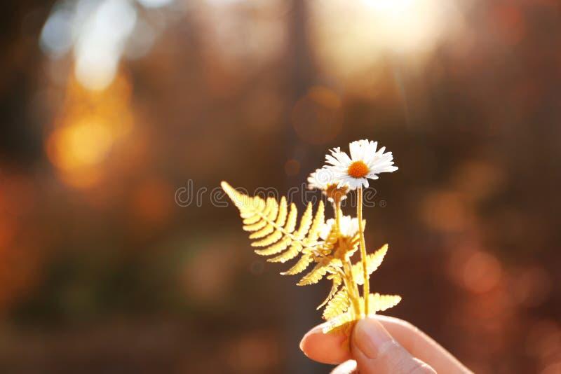 Frau, die in der Hand wilde Blumen hält lizenzfreies stockfoto