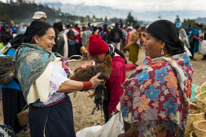 Frau, die ein Huhn am Viehbestandmarkt der Stadt von Otavalo in Ecuador verkauft stockfotografie