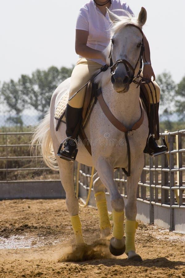 Frau, die ein Pferd reitet stockfotos