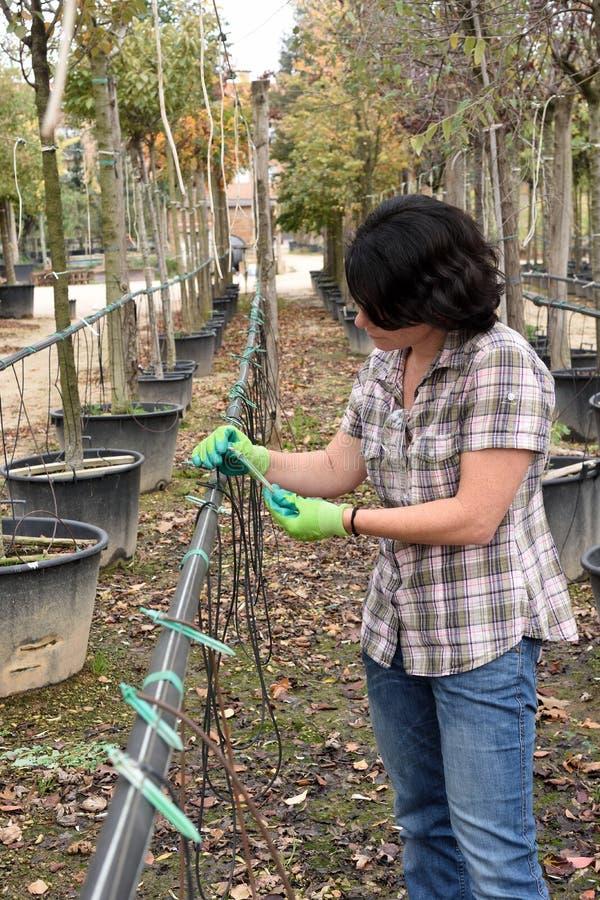 Frau, die eine Berieselung in einer Gartenarbeitmitte vorbereitet stockbild