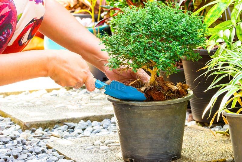 Frau, die einen Baum im Garten pflanzt lizenzfreie stockfotografie