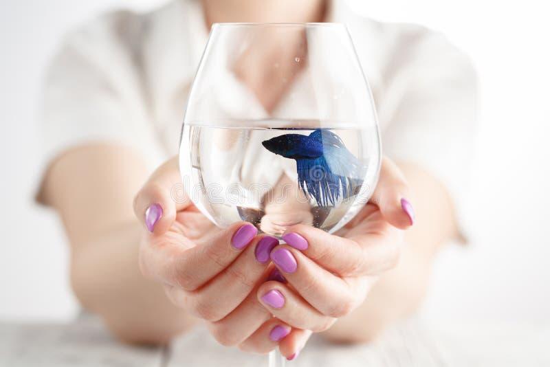 Frau, die einen Goldfisch in ihren Händen mit Wasser hält stockfotos