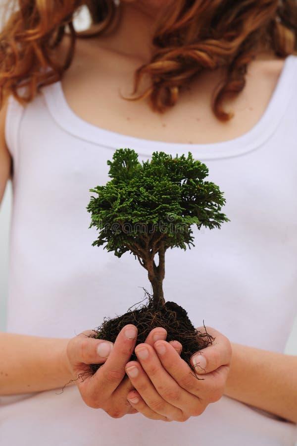 Frau, die einen kleinen Baum anhält stockfotos