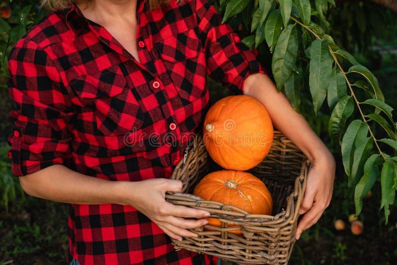 Frau, die einen Korb mit orange Kürbisen hält lizenzfreies stockbild