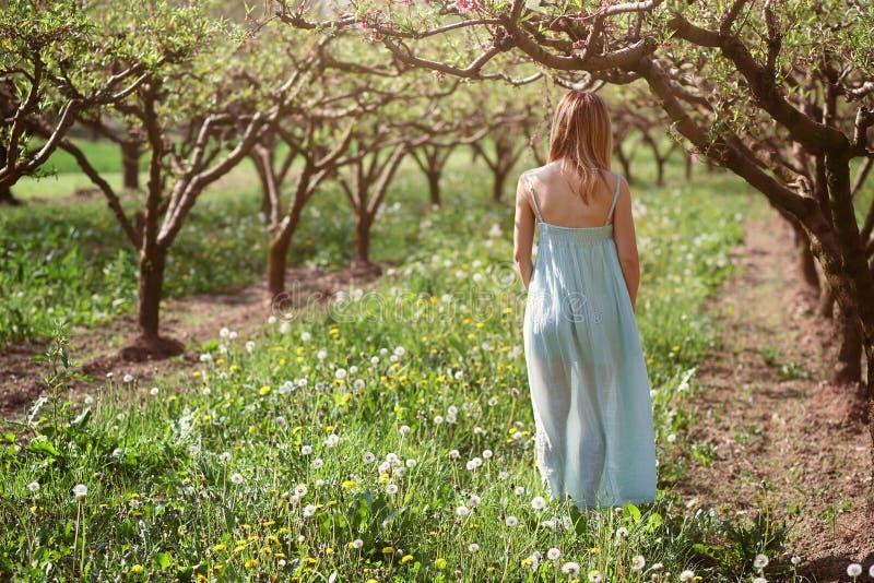 Frau, die in einen Obstgarten geht stockbilder