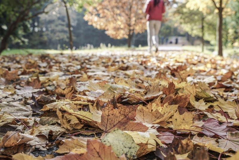 Frau, die in einen Park im Herbst geht stockfotografie