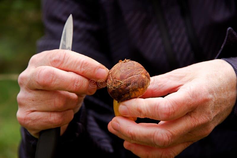 Frau, die einen Pilz und ein Messer holdinding ist lizenzfreies stockfoto