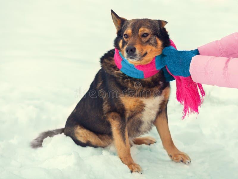 Frau, die einen Schal auf einem Hund bindet lizenzfreie stockbilder