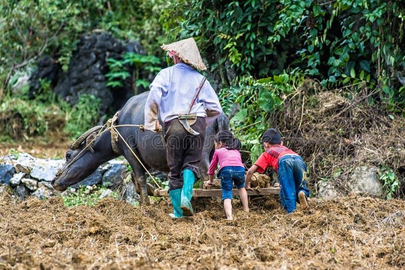 Frau, die an Feldern in Vietnam arbeitet stockfotos