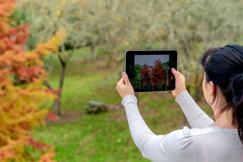 Frau, die Fotos mit Tablette macht lizenzfreie stockfotografie
