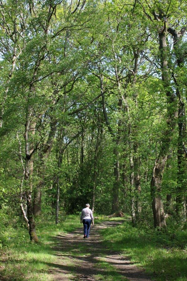 Frau, die im Frühjahr auf Waldfußweg geht stockfotos
