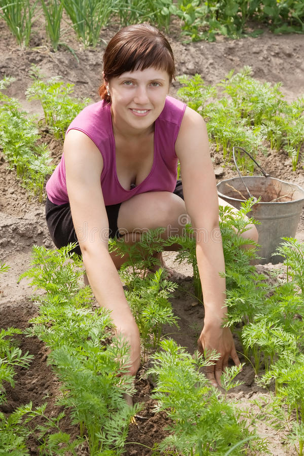 Frau, die im Gemüsegarten arbeitet stockfotografie
