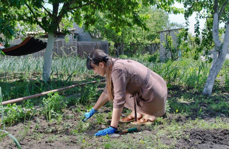 Frau, die im Gemüsegarten arbeitet lizenzfreie stockfotografie
