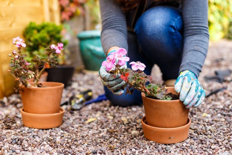 Frau, die im Herbst im Garten arbeitet lizenzfreies stockbild
