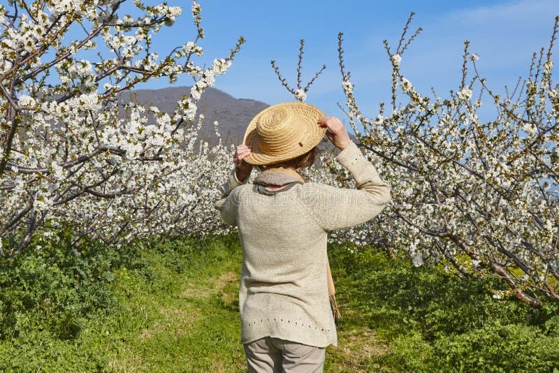 Frau, die Kirschblüte schaut Jerte-Tal, Caceres Frühling Spai stockfoto