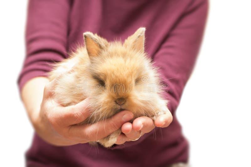 Frau, die kleines Kaninchen lokalisiert auf weißem hält lizenzfreies stockfoto