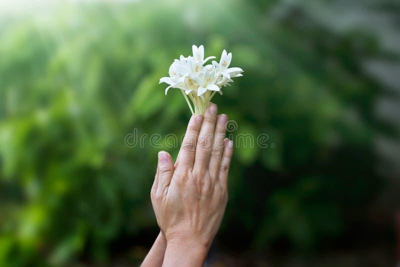 Frau, die mit weißer Blume in den Händen auf Natur betet stockfotografie