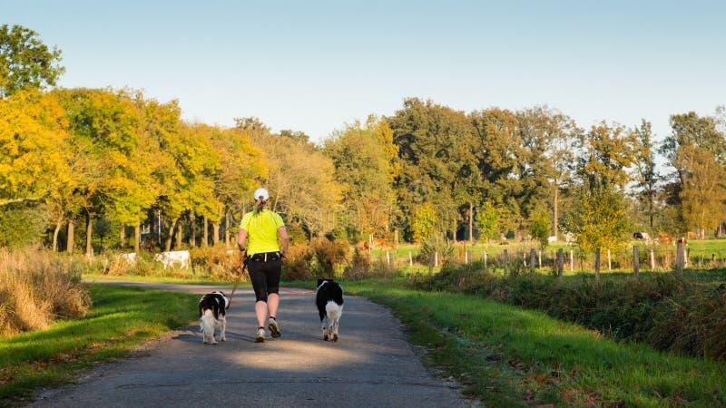 Frau, die mit zwei Hunden auf Landstraße läuft stockfotos