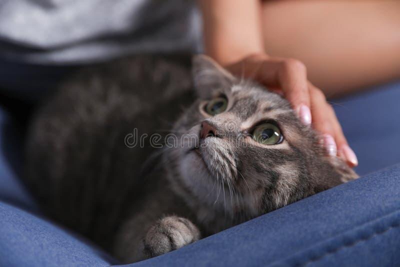 Frau, die nette Katze auf Lehnsessel streicht Haustier und Inhaber lizenzfreies stockbild