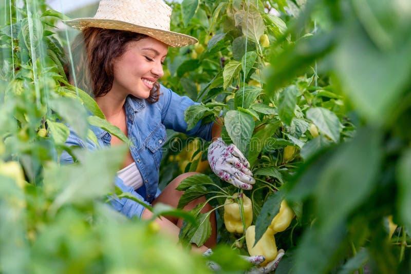 Frau, die organisches Gemüse am Gewächshaus wächst lizenzfreie stockfotografie