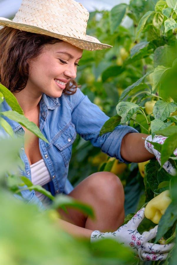 Frau, die organisches Gemüse am Gewächshaus wächst lizenzfreies stockbild