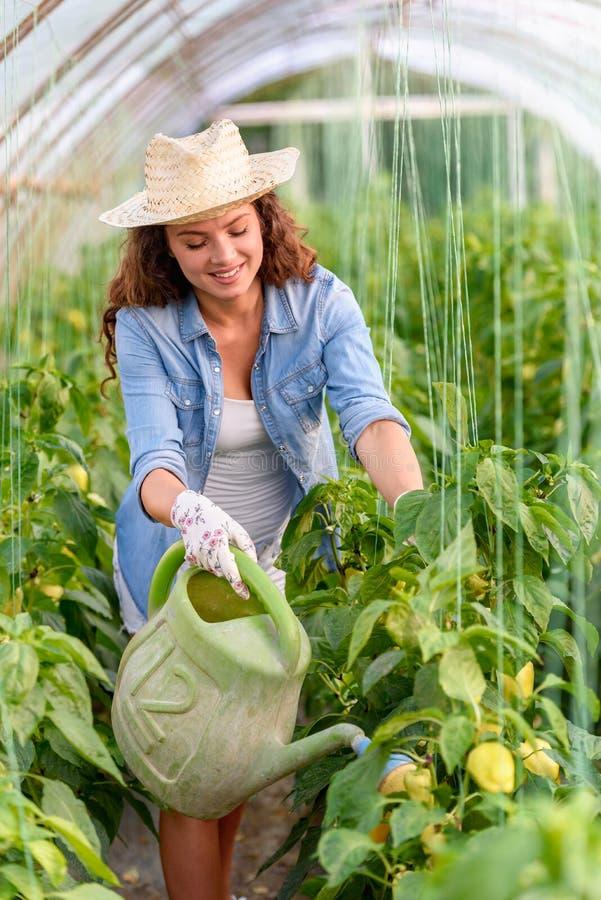 Frau, die organisches Gemüse am Gewächshaus wächst stockfoto