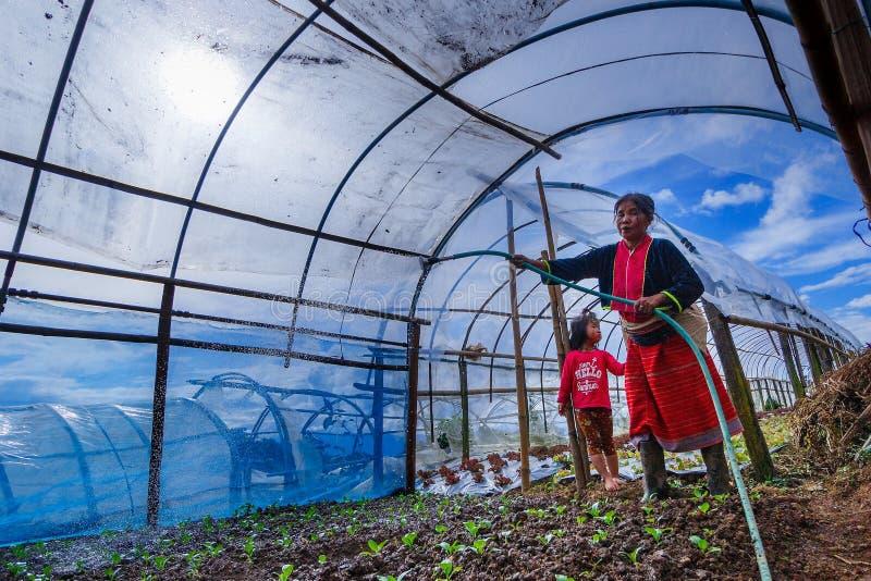 Frau, die organisches Gemüse im Gewächshaus im Gemüseflecken wässert lizenzfreie stockbilder