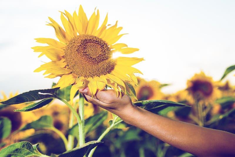 Frau, die schöne große Sonnenblumen hält stockfotografie