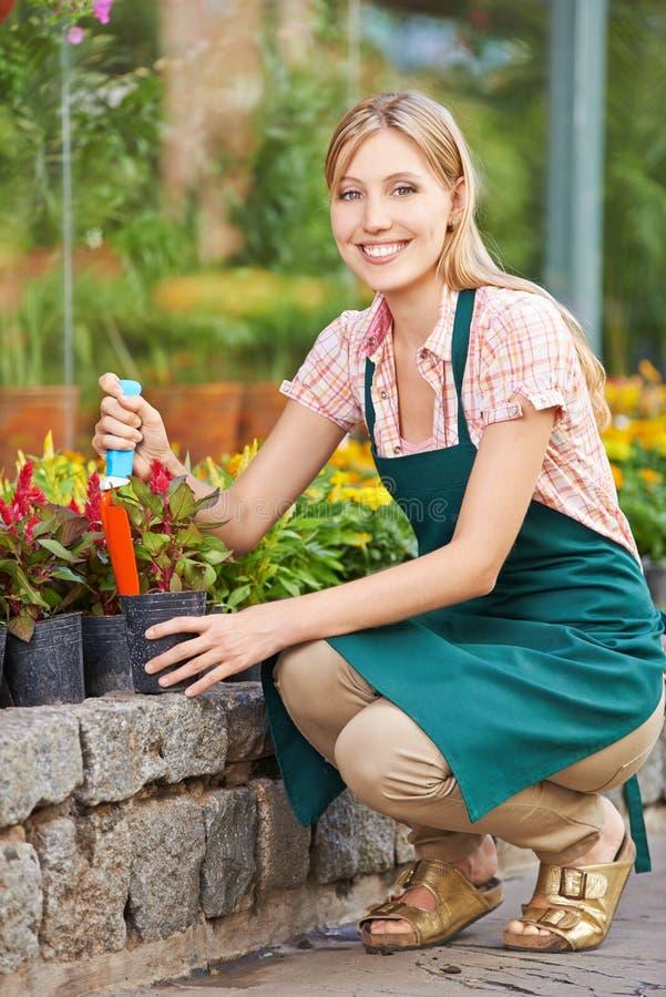 Frau, die sie im Garten arbeitend repotting ist stockfotografie