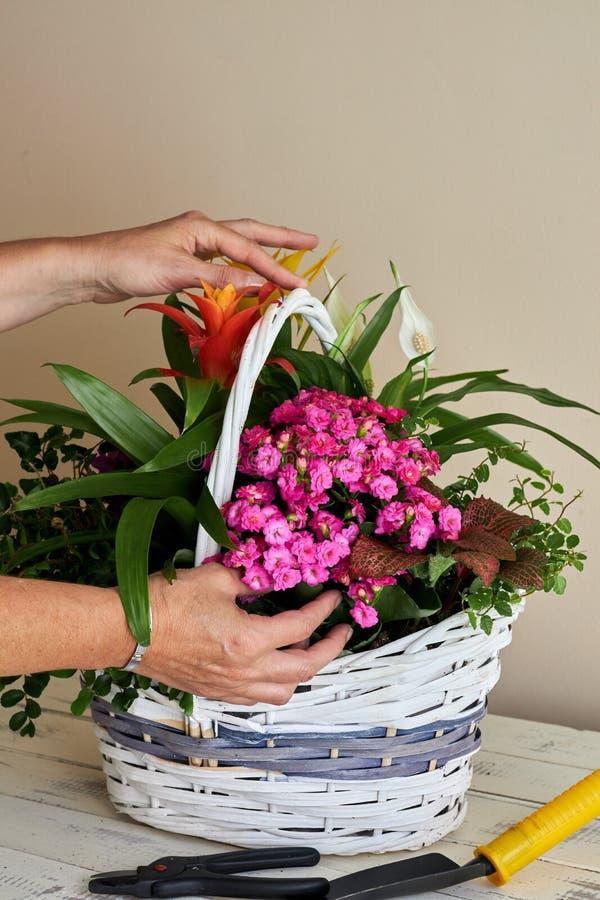 Frau, die verschiedene Blumen in einen Weidenkorb legt stockbilder