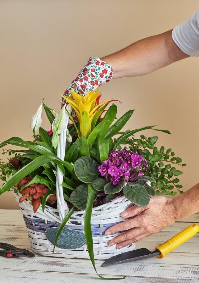 Frau, die verschiedene Blumen in einen Weidenkorb legt stockfotografie