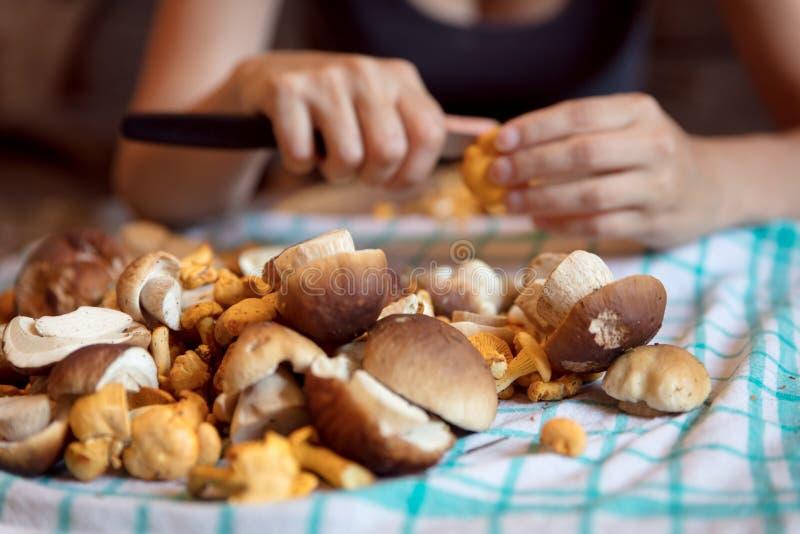 Frau, die wilde Pilze in der Küche, im porcini und im chante säubert stockfotos